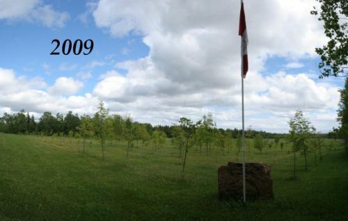 Tree Lot (2009)