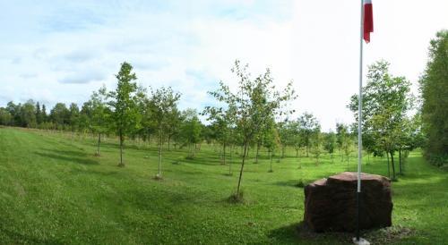 Tree Lot (2013)